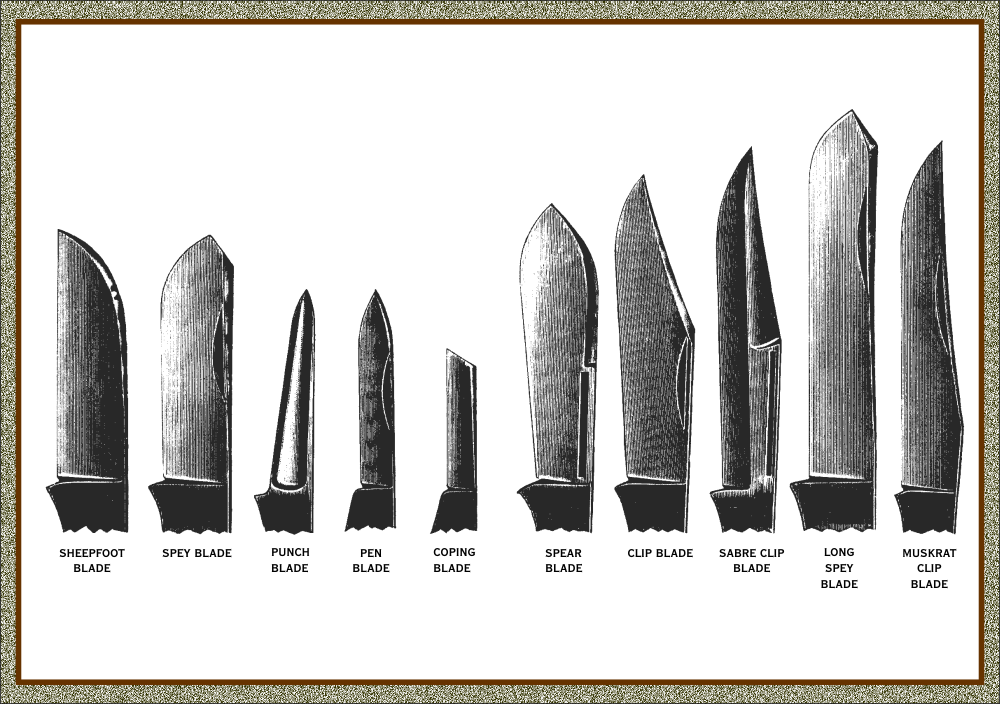 Knife Terminology